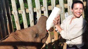 Kristin Davis füttert einen Elefanten