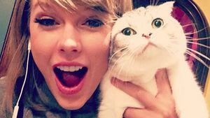 Taylor Swift Selfie mit Katze