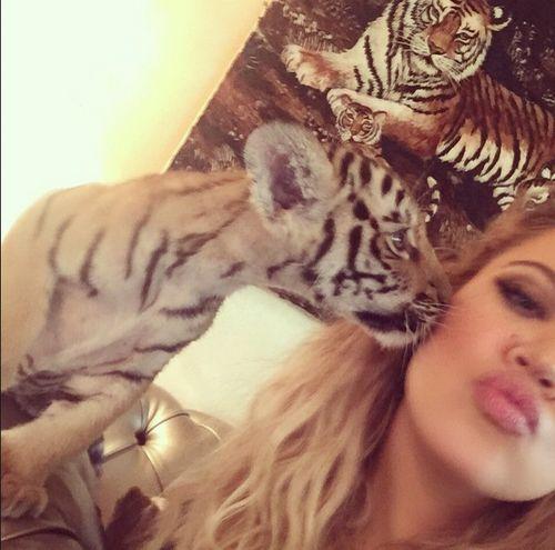 Khloe Kardashian bekam jetzt einen Tiger-Kuss