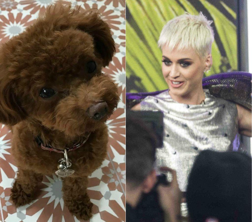 Nugget Konkurrenz Katy Perry Kuschelt Mit Riesen Schlange