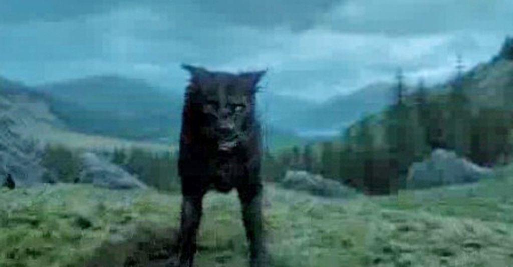 Harry Potter-Hund Tatze noch immer ohne Herrchen