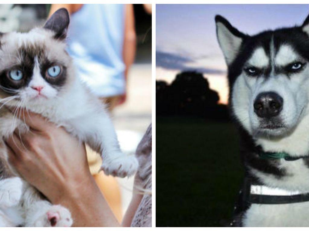 Grumpy Cat und Anuko