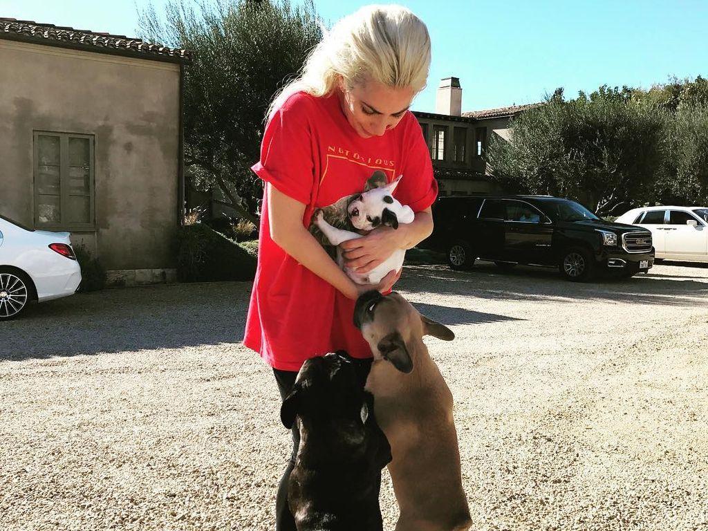 Lady Gaga mit ihren Hunden