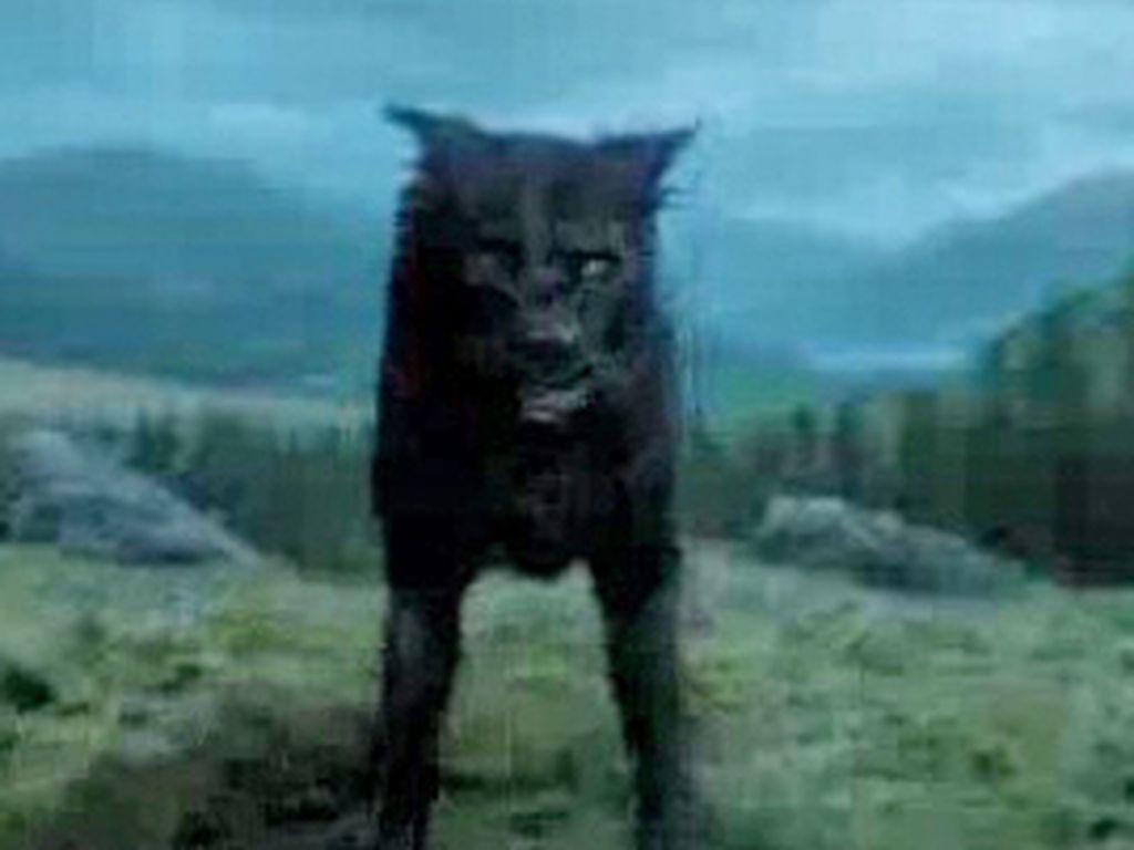 sirius black hund