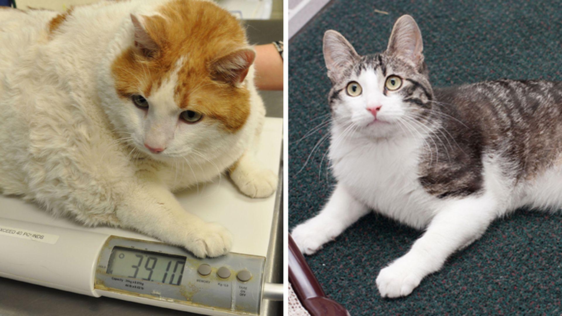Meow Wog 17 Kg Fettester Kater Der Welt Ist Tot Promiflashde