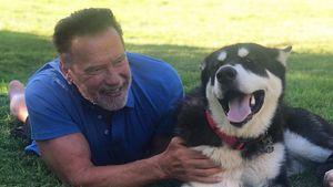 Arnold Schwarzenegger freut sich über tierischen Zuwachs