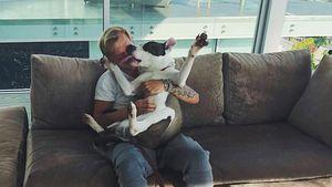 Nach Tod von Herrchen Avicii (†): Hier lebt sein Hund jetzt!