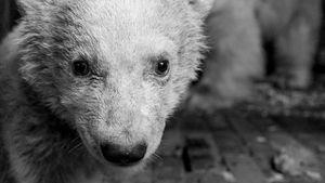 Trauer um Eisbär-Baby Fritz: Hier ging's ihm doch noch gut!
