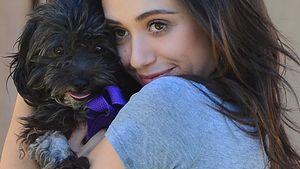 Süße Adoption! Emmy Rossum rettet kleinen Hund