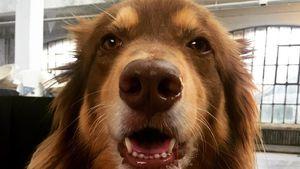 """Happy """"National Puppy Day"""": Die 4 süßesten Hunde der Stars!"""