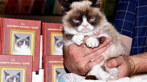 Grumpy Cat wird zur mies gelaunten Star-Autorin