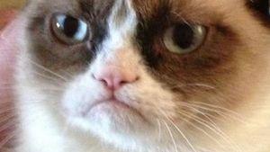 """Trefft """"Grumpy Cat"""", den grantigen Internet-Star!"""