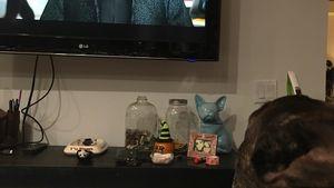 "Rührend: Carrie Fishers Hund Gary schaut ""Star Wars""-Trailer"