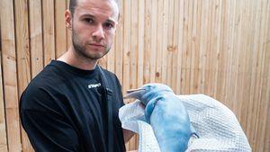 PR-Stunt: Alles zum Baby-Delfin-Skandal von Inscope21!