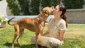 Plötzlicher Tod: Jenna Dewan und Steve trauern um ihren Hund