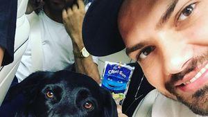 """Nach """"Let's Dance""""-Fußbruch: Jimi Blue tobt mit Hund herum"""