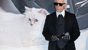 Karl Lagerfeld: Millionen-Erfolg für seine Katze Choupette
