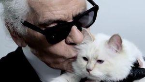 Wo ist Karl Lagerfelds Erbin? Katze Choupette wird vermisst