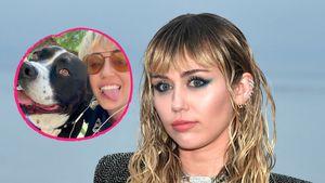 """""""Danke für alles"""": Miley Cyrus trauert um geliebte Hundedame"""