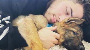 Familienzuwachs: Priyanka schenkt Nick Jonas Hunde-Welpen!