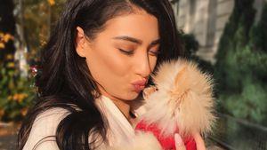 Horror für YouTube-Star Paola: Welpe kämpft um sein Leben!