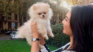 Nach Traumhochzeit: Hunde-Geschenk für YouTube-Paola!