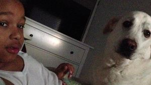 """""""Momo""""-Star Radost am Boden: Geliebter Hund liegt im Sterben"""
