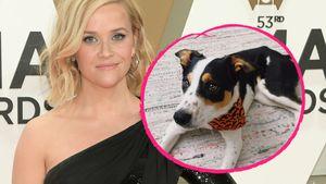 Nach Trauer um Bulldogge: Reese Witherspoon hat neuen Hund
