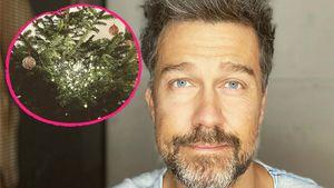 Kein perfekter Baum: Carpendales verzweifeln an Lichterkette