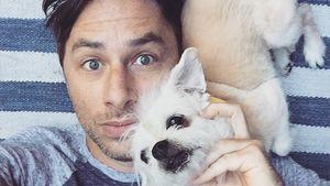 Rührende Bilder: Zach Braff trauert um seinen Hund Roscoe