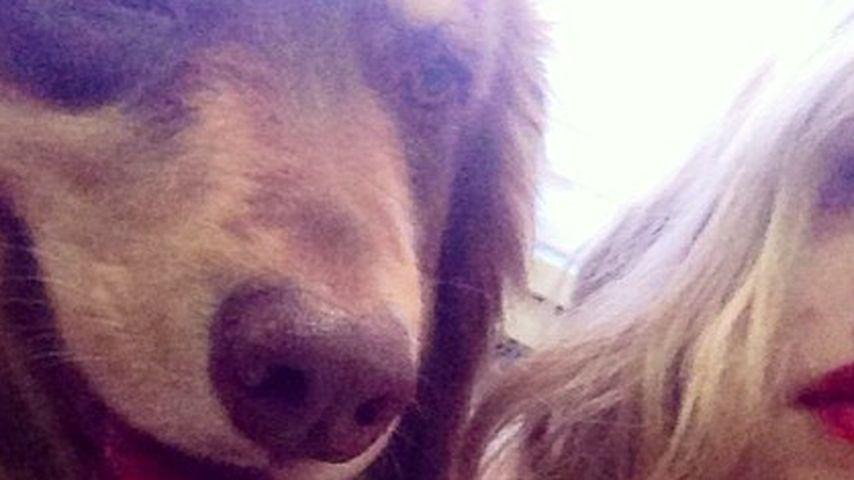 Amanda Seyfried will Unsterblichkeit für Hund Finn