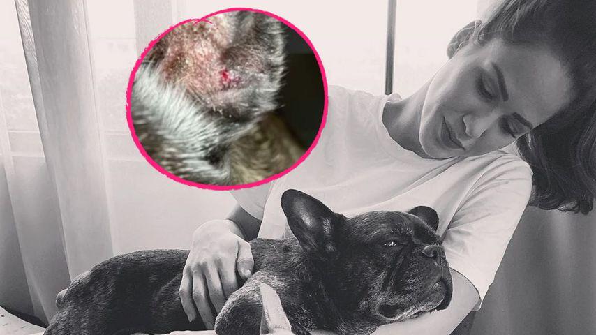 """Recht tief"": Angelina Panneks Hund Louis wurde gebissen!"