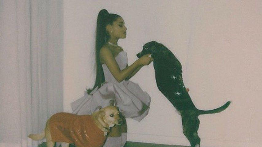 Ariana Grande mit ihren Hunden Toulouse und Myron