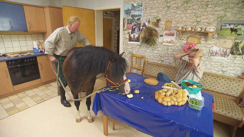 Kuriose BsF-Aktion: Beate hat ein Pferd in der Küche!