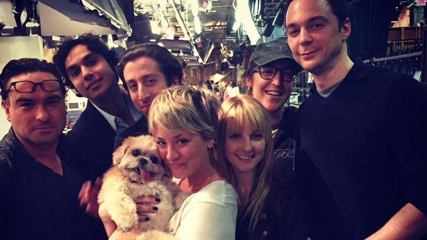 Big Bang Theory-Stars und Marnie The Dog