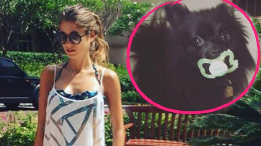 Fan-Debatte: Warum hat Cathy Hummels' Hund einen Schnuller?