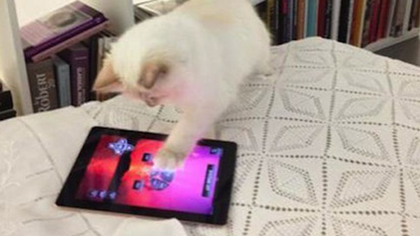 Choupette Lagerfeld an ihrem iPad