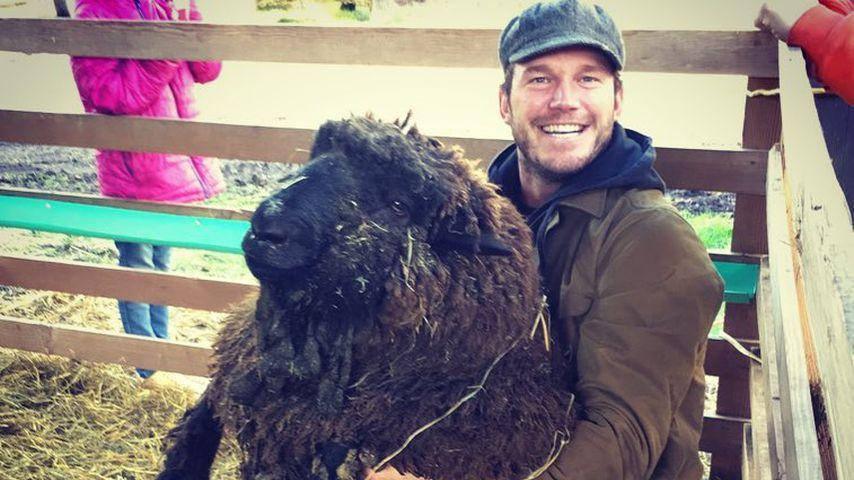 Chris Pratt und sein Schafbock Rupert