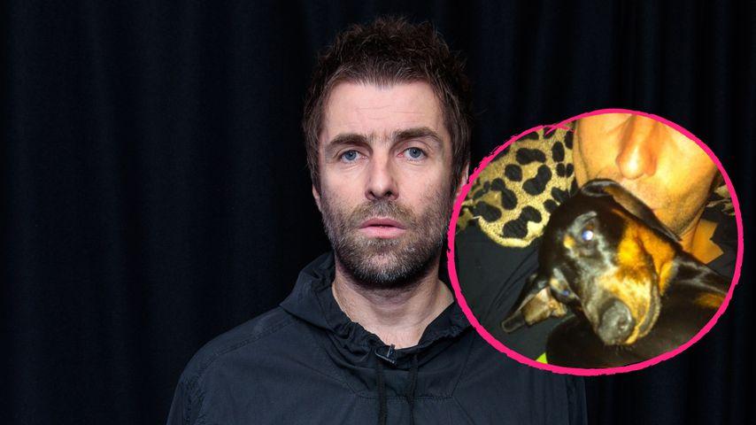 """""""Am Boden zerstört"""": Liam Gallagher trauert um seinen Hund"""