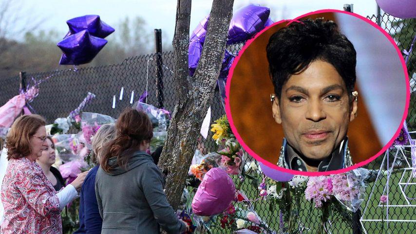 Am Todesort: Fan-Massen verabschieden ihr Idol Prince
