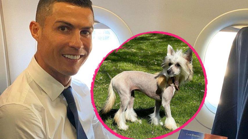 Chinesischer Schopfhund: Netz lacht über Ronaldos neues Tier