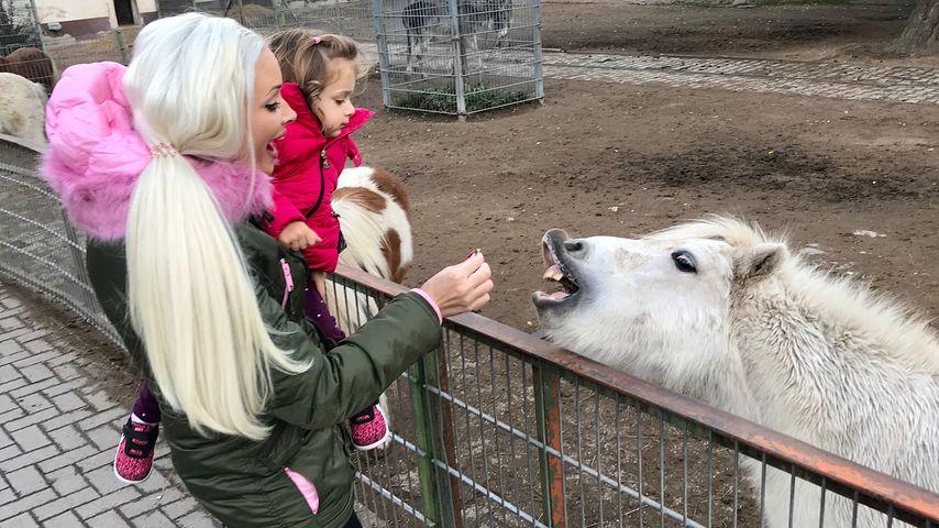 Furchtloses Katzen-Duo: Dani & Sophia füttern hungriges Pony