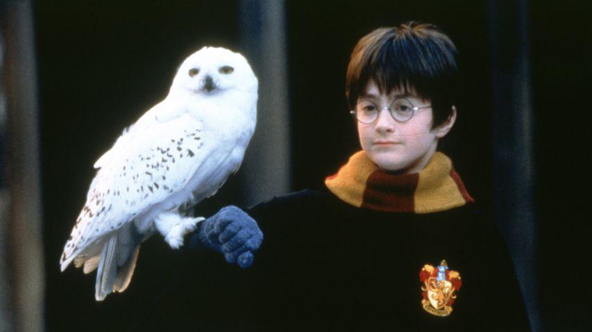 """Danielle Radcliffe in """"Harry Potter und der Stein der Weisen"""""""