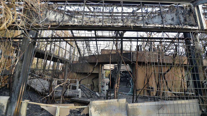 Brand Im Affenhaus