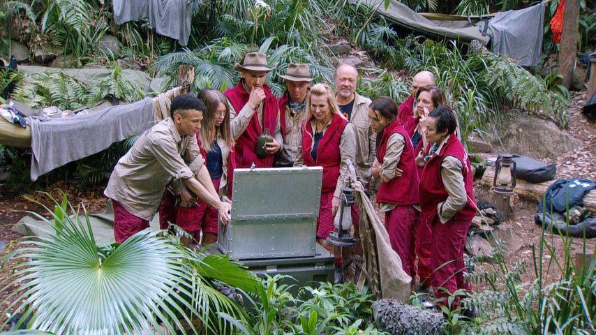 Tag fünf im Dschungelcamp: Wer ist heute euer Liebling?