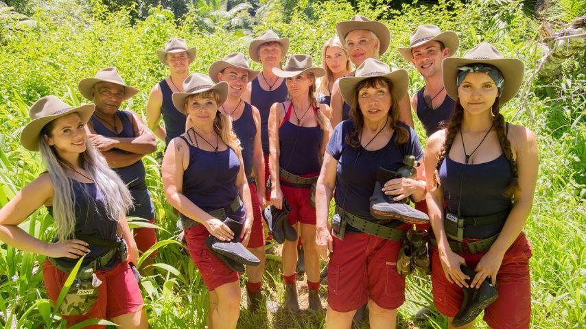 Nach Einzug & Ekelprüfung: Wer ist euer Dschungelfavorit?