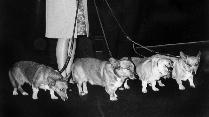 Die Queen mit vier Hunden im Jahr 1969