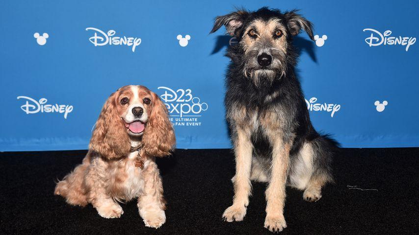 Rose und Monte bei der Disney D23 Expo in Anaheim