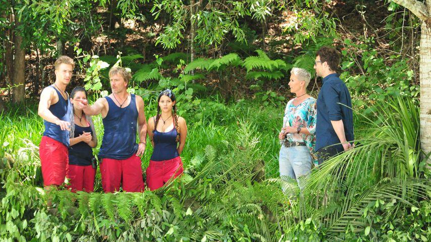 David Friedrich, Jenny Frankhauser, Ansgar Brinkmann und Kattia Vides bei ihrer Dschungel-Prüfung