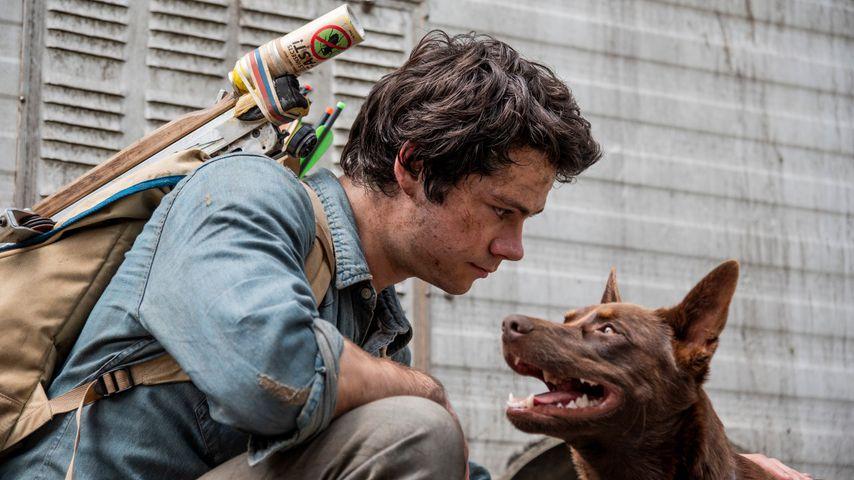 """Netflix-Chartstürmer: Erhält """"Love and Monsters"""" ein Sequel?"""